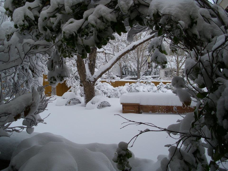 Big Snow in Parker, Colorado
