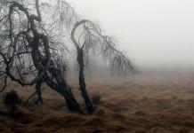 gloomy tree